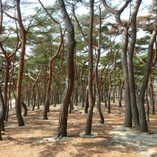 korean legal translation - Trip to Deokjeok Island, Day 1